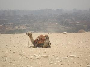 Gaza Pyramids. I love this camel!